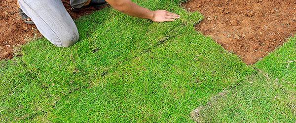prix paysagiste pelouse